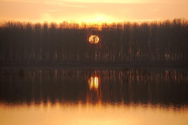 Padule di Fucecchio al tramonto